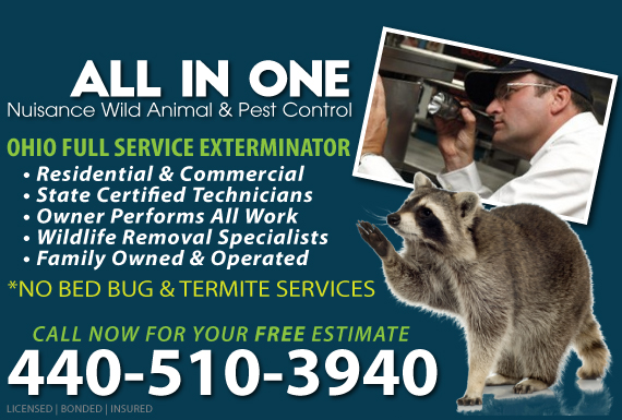Exclusive Ad: All In One Nuisance Wild Animal & Pest Control Berea 4404549571 Logo