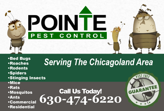 Exclusive Ad: Pointe Pest Control Oak Brook 6302803682 Logo