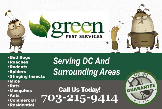 Exclusive Ad: Green Pest Services - Weekdays Chantilly 7039887785 Logo