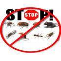 Detroit Bed Bug & Pest Control Specialist Logo